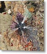 Diadema Urchin Metal Print