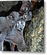 Diamond In The Ruff Ice Metal Print