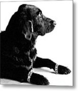 Diamonds Are A Dogs Best Friend Metal Print