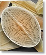 Diatom, Sem Metal Print by Power And Syred
