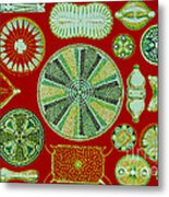 Diatoms-ernst Haeckel Metal Print