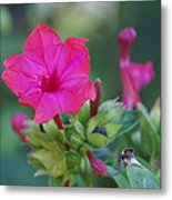 Diego De La Noche-blossom Of Red Metal Print