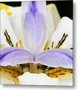 Dietes Grandiflora Close-up Metal Print