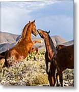 Difference Of Opinion    Metal Print