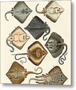 Different Kinds Of Rays Metal Print