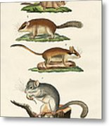 Different Kinds Of Sleepers Metal Print