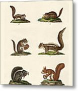 Different Kinds Of Squirrels Metal Print
