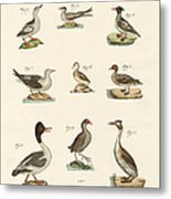 Different Kinds Of Waterbirds Metal Print