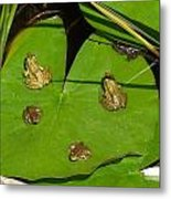 Different Stages Of Frog Growth Metal Print