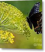 Dill And The Butterfly Metal Print