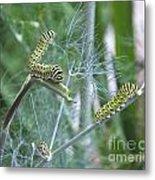 Dillweed And Caterpillars Metal Print