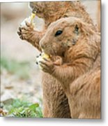 Dining Out With Friends Metal Print