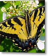 Dinner For The Swallowtail Metal Print