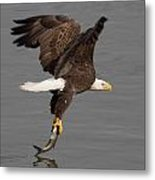 Dinner Is Serverd  Metal Print by Glenn Lawrence