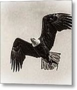 Dinner Time Black And White Metal Print