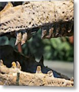 Dinosaur Jaws Exhibit Metal Print