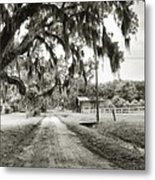 Dirt Road On Coosaw Plantation Metal Print