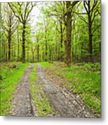 Dirt Road Surrounded By Trees In Metal Print