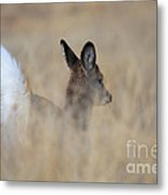 Disappearing Act Metal Print