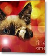 Disco Kitty 1 Metal Print