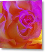 Disco Rose   Metal Print