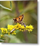 Diversity - Insects Metal Print