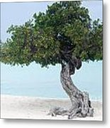 Divi Divi Tree In Aruba Metal Print