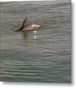Diving Dolphin Metal Print