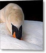 Do Not Disturb - Swan On Nest Metal Print