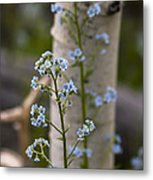 Do Not Forget Me Metal Print