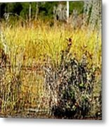Do You See It Metal Print