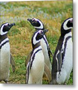 Do You Smell That - Penguins Metal Print