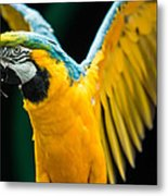 Do Your Exercise Daily Blue And Yellow Macaw Metal Print