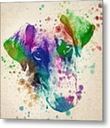 Doberman Splash Metal Print