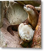 Doctor Otter At The Western North Carolina Nature Center Metal Print
