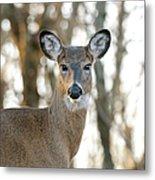 Doe A Deer A Female Deer Metal Print