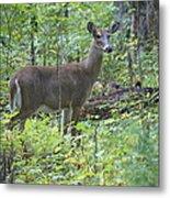 Doe A Deer Metal Print