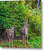 Doe A Deer Metal Print