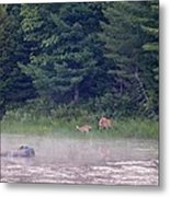Doe And Fawn In The Early Morning Metal Print