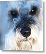 Dog 2 Metal Print by Wingsdomain Art and Photography