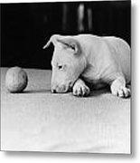 Dog And Ball Metal Print