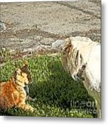 Dog And Cat Discuss Metal Print by Artist and Photographer Laura Wrede