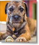 Dog And Chew. Metal Print