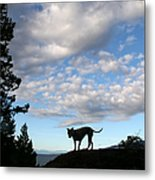 Dog And Sky Metal Print