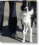 Dog And True Friendship 9 Metal Print