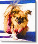 Dog Daze 3 Metal Print