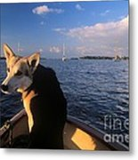 Dog In A Dingy At Put-in-bay Harbor Metal Print