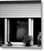 Dog In A Window Metal Print by Fabrizio Troiani