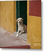 Dog In Colorful Mexican City Metal Print