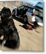 Dog In Front Of A Climbers Car Metal Print
